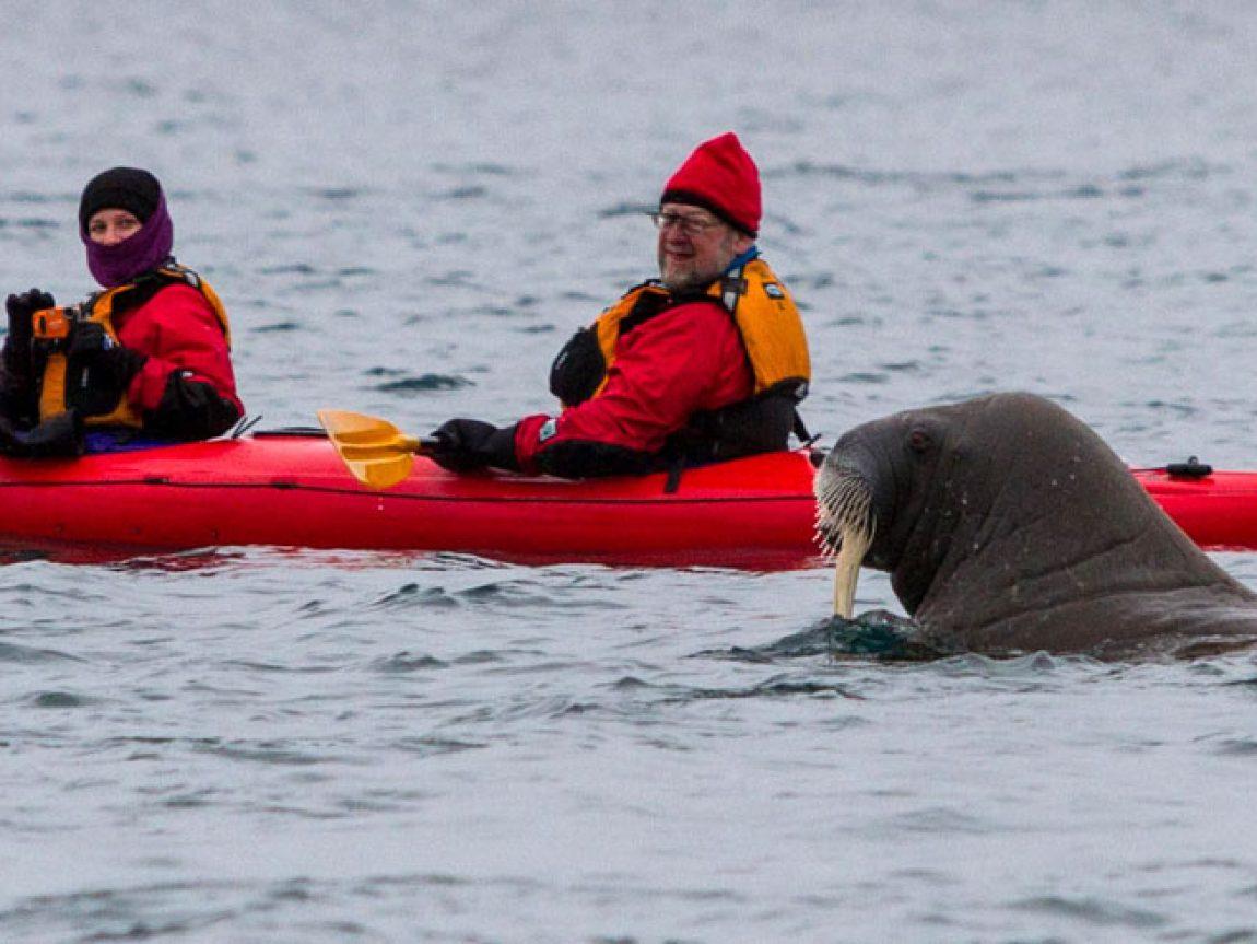 arctic spitsbergen kayaking phippsoya anjali pande