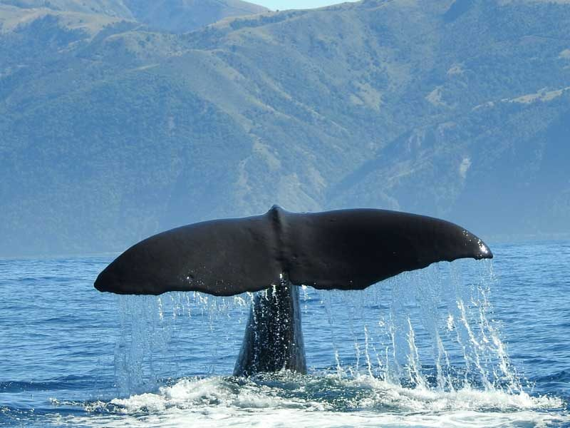 whale tail New zealand donna