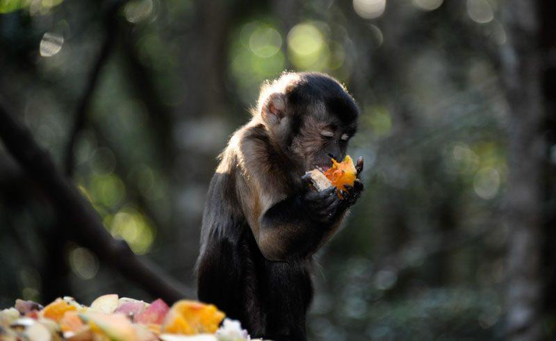 south africa monkeyland sanctuary flikr