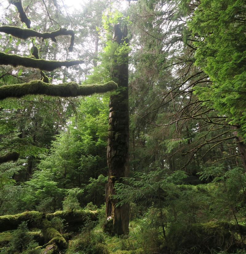 canada haida gwaii totem pole lauren gardner