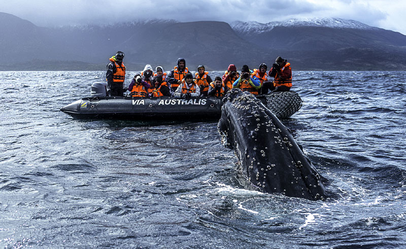 chile patagonia zodiac whale watching australis
