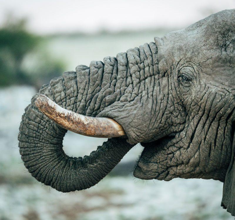 elephant namibia photography