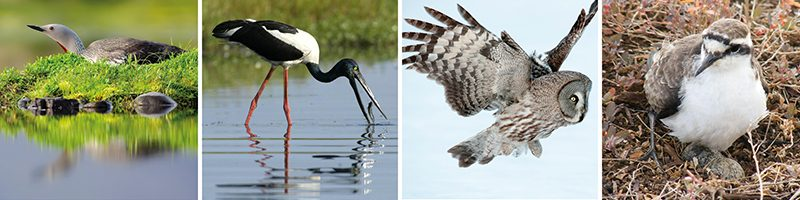 best birdwatching holidays diver jabiru grey owl wirebird