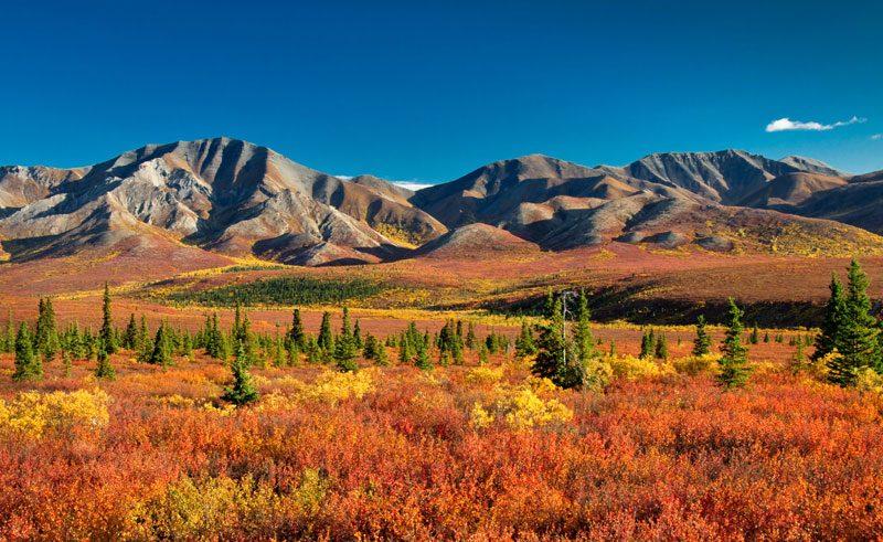 alaska denali national park autumn colours do