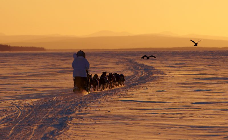 alaska iditarod trail husky team