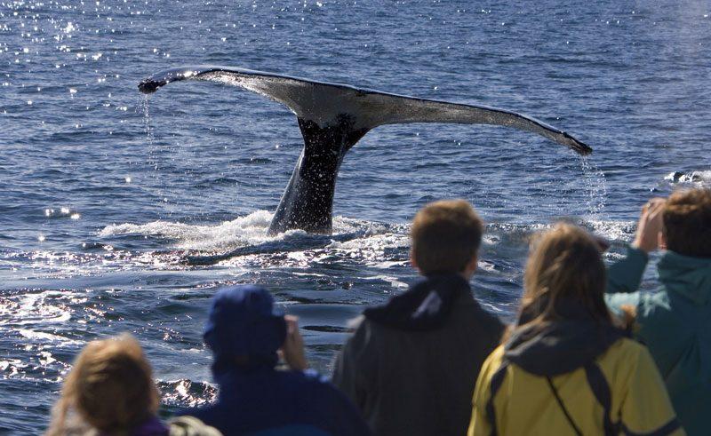 alaska wildlife whale watching istock