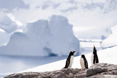 antarctic gentoo penguins against epic backdrop stock