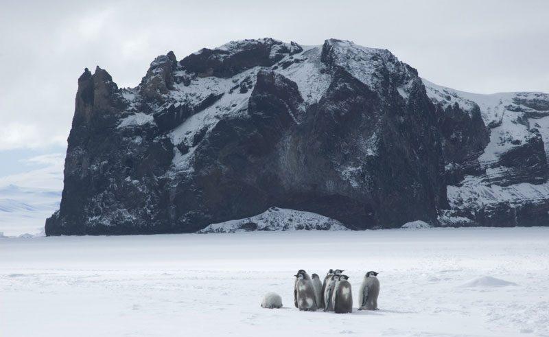 antarctica emperor chicks at cape washington ross sea oc