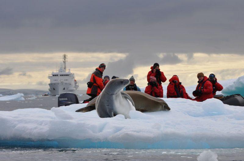 antarctica pensinsula leopard seal on ice ooe