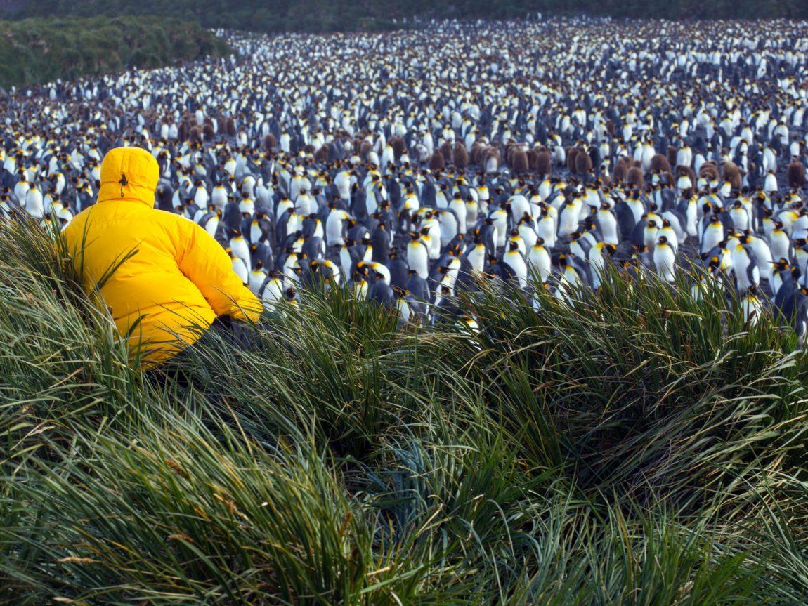 antarctica south georgia salisbury plain ze