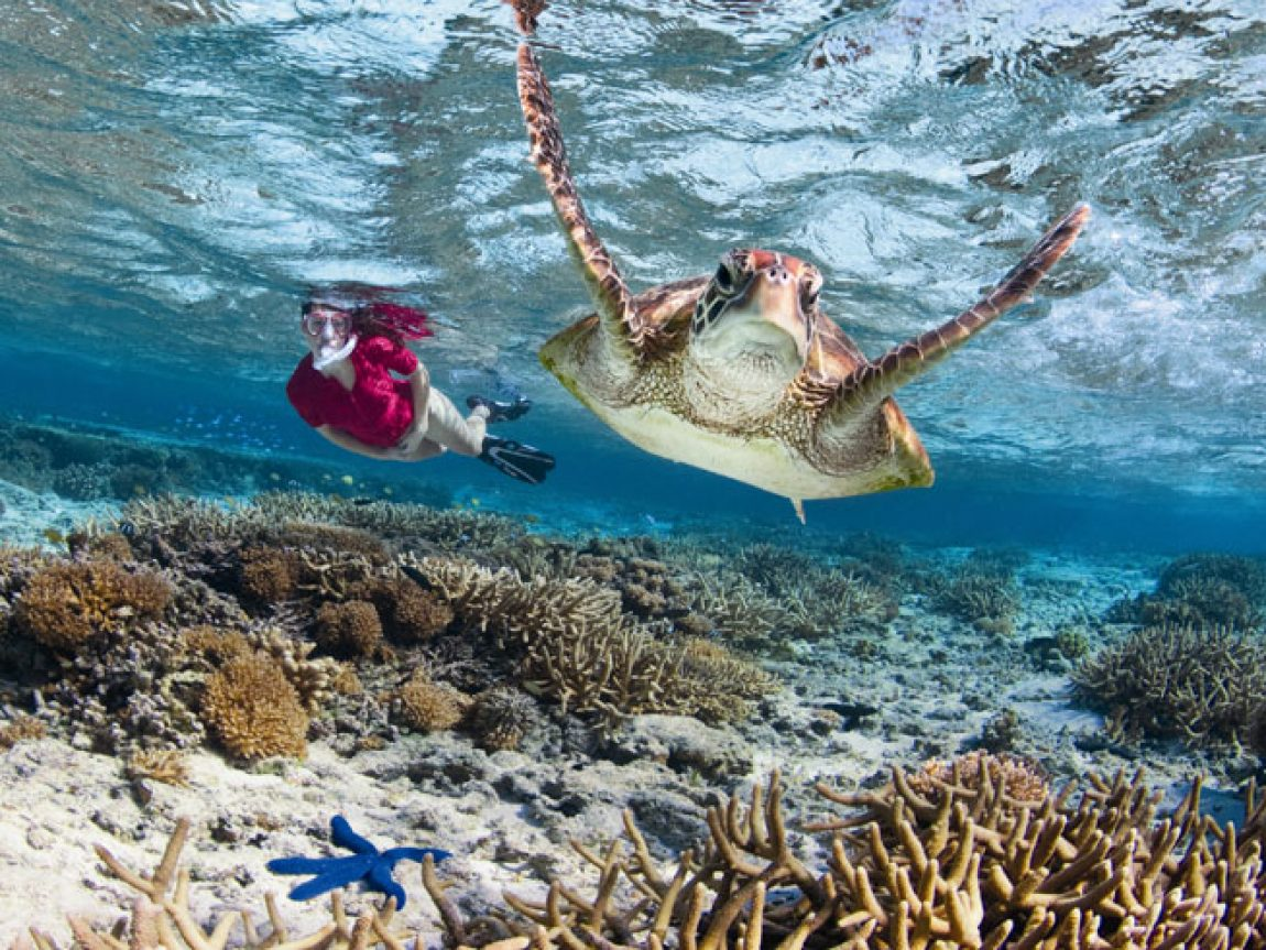 australia queensland gbr snorkelling with turtle