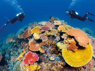 australia queensland great barrier reef coral divers ta