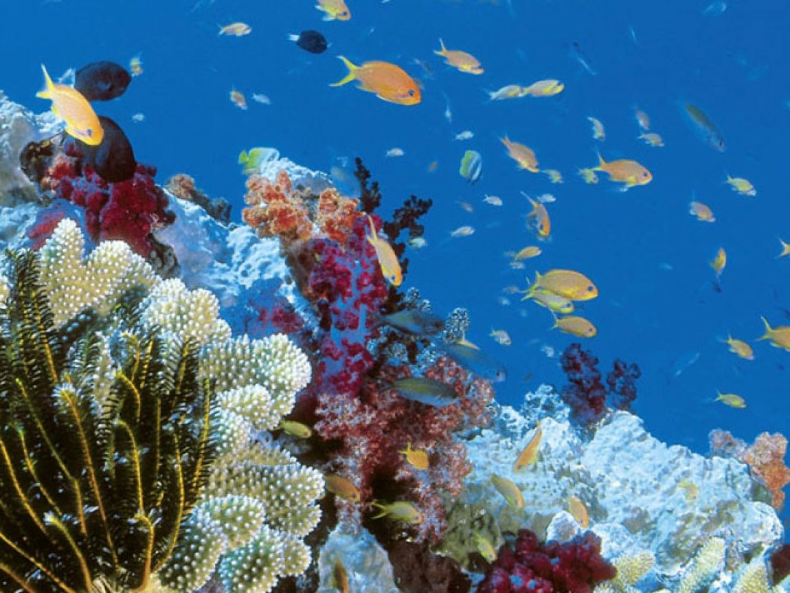 australia queensland great barrier reef coral fish ta