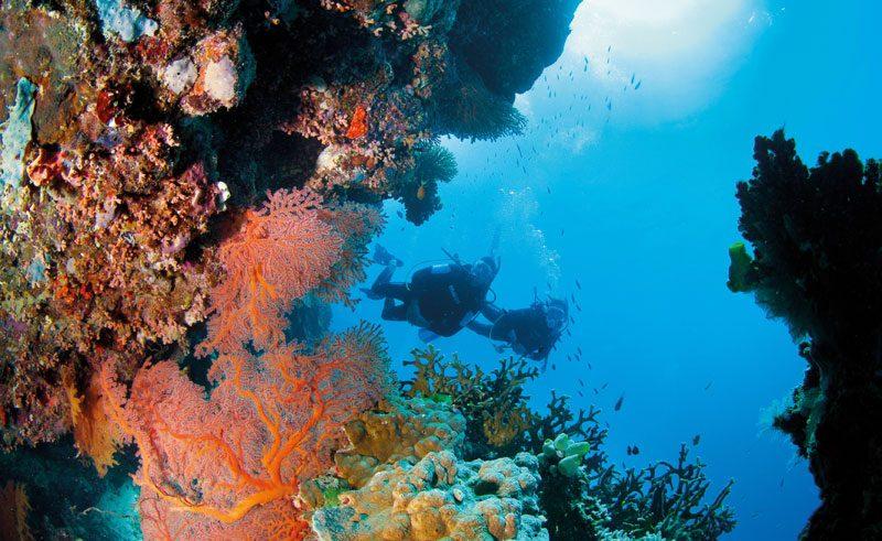 australia queensland great barrier reef pixies garden tq