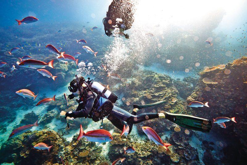 australia queensland heron island diving tq