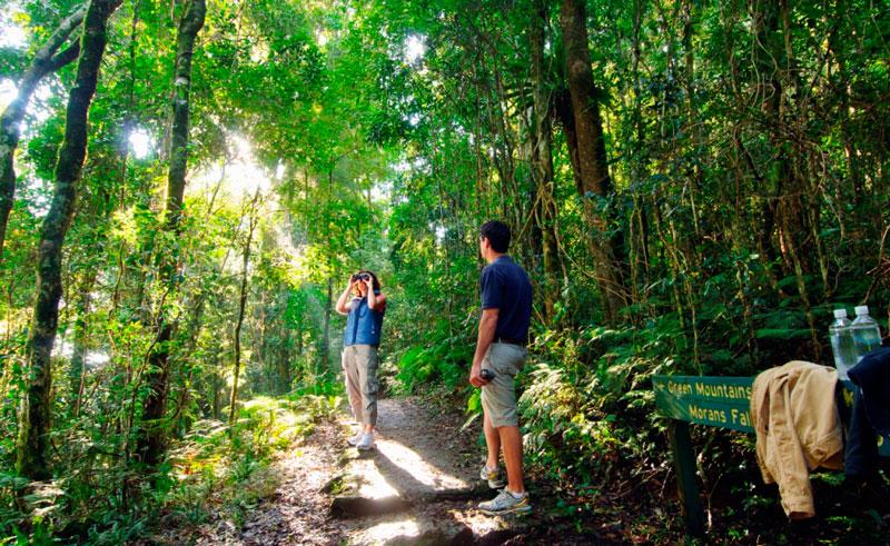 australia queensland oreillys rainforest bushwalk couple