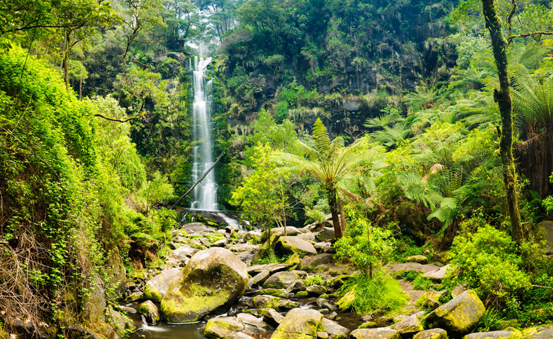 australia victoria otway national park ss