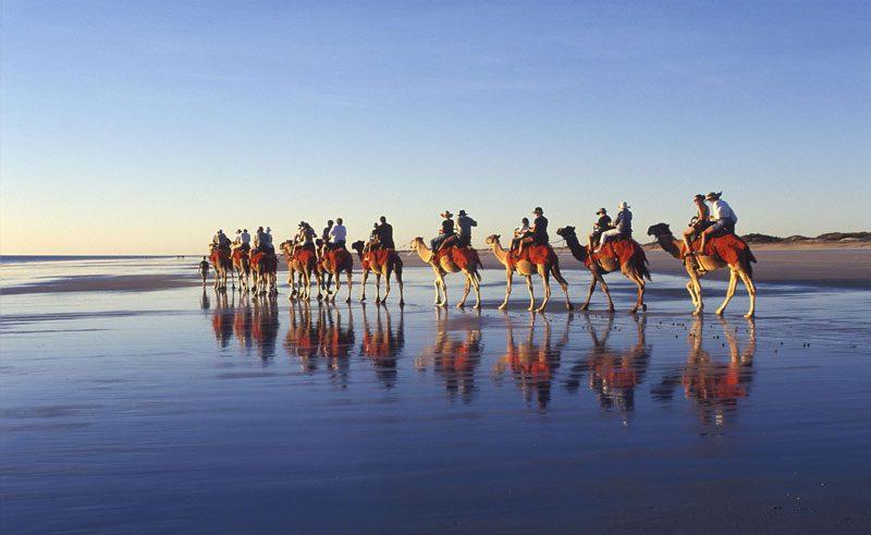 australia wa broome cable beach camels ta