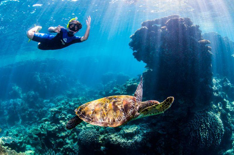 australia wa coral coast ningaloo reef snorkelling twa