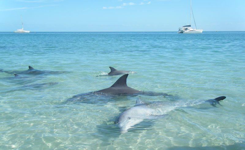 australia wa dolphins monkey mia lb