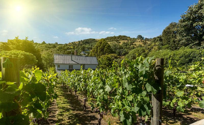beaufort house vineyard