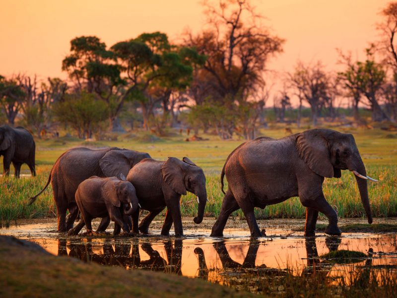 botswana chobe national park elephants sunset adstk