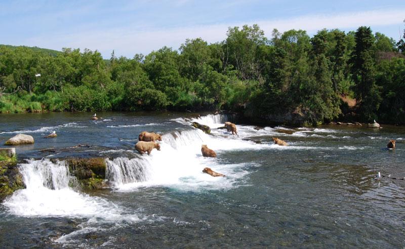 Grizzlies at Brooks Falls