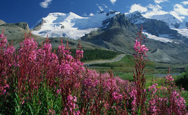 canada alberta rockies flora ta