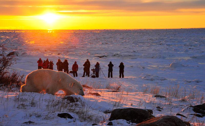 canada churchil wild sunset bear ian johnson