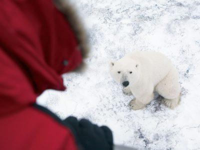 canada churchill polar bear watching ctc