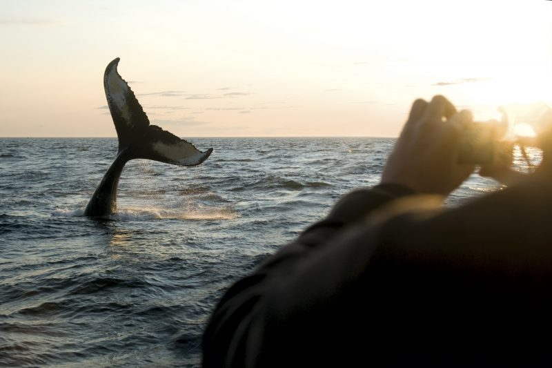 canada nova scotia whale watching on brier island nst