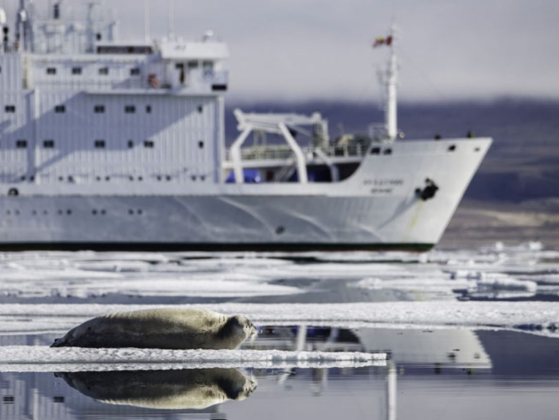 canadian arctic ringed seal and polar ship oo