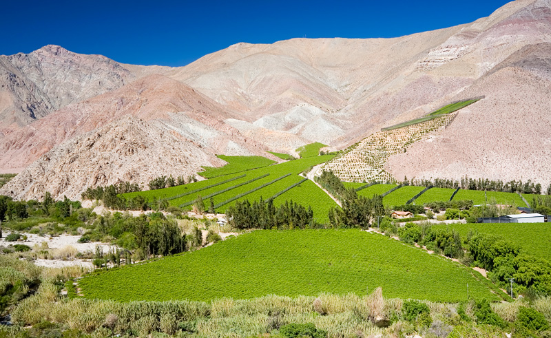 chile atacama elqui valley vineyards is