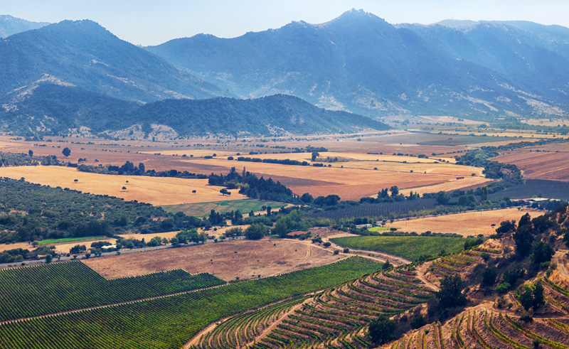 chile central colchagua vineyard valley is