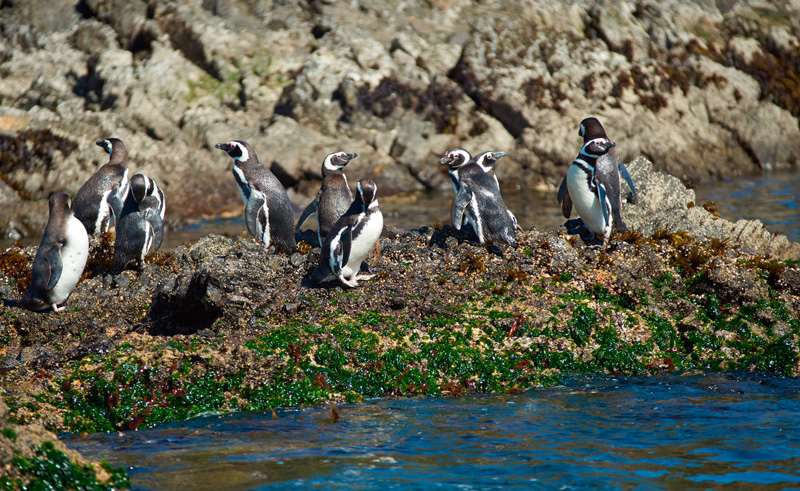 chile lakes punihuil penguins adstk