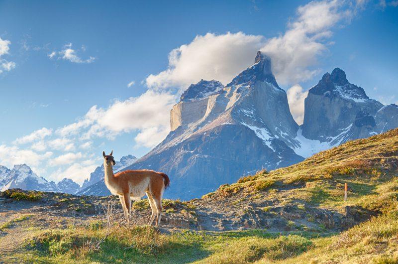 chile patagonia guanaco istk