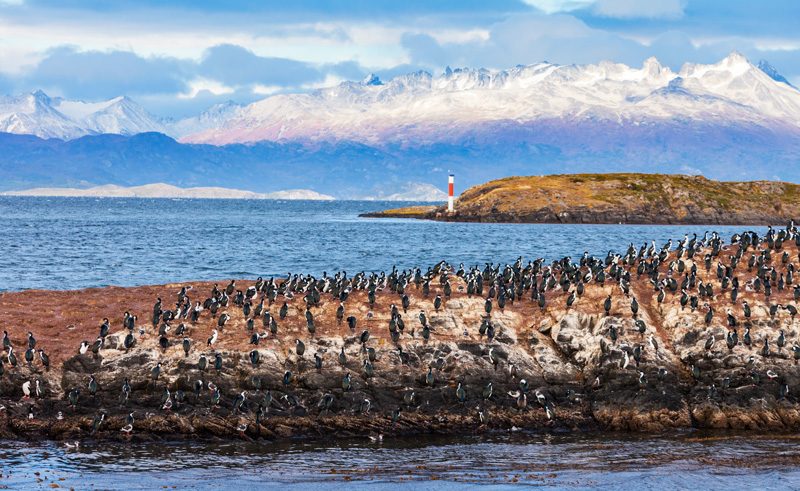 chile patagonia ushuaia bird island as