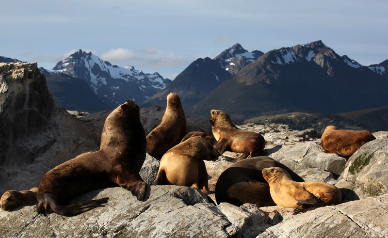 chile patagonia ushuaia seal island beagle channel as