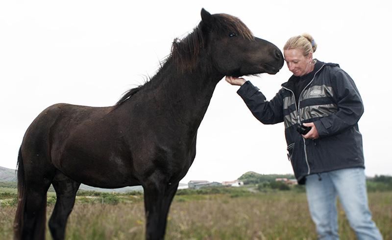 efstidalur farm horse