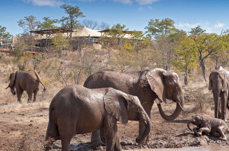 elephant camp wildlife