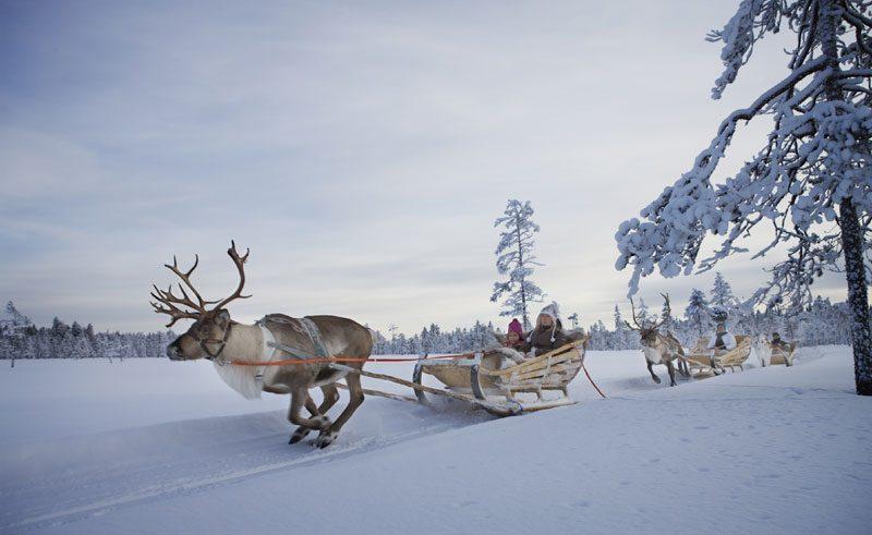 finland lapland levi reindeer safaris vl