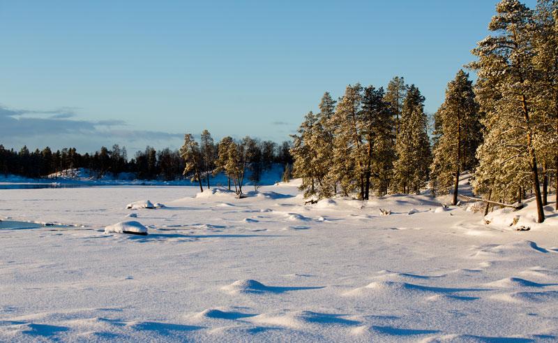 finland lapland nellim wilderness trees lake