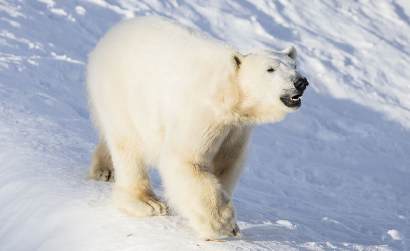 finland lapland ranua wildlife park polar bear