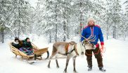 finland reindeer and sami ranua