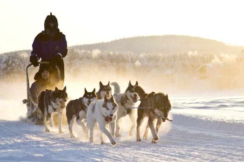 finnish lapland husky sledding winter sun nellim