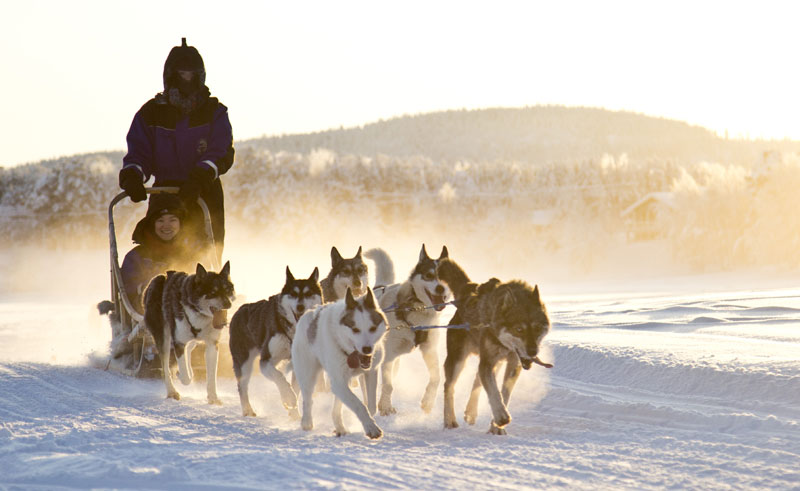 finnish lapland husky sledding winter sun nellim
