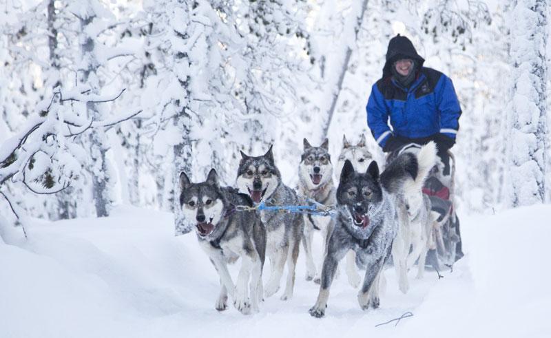 finnish lapland lake inari husky sledding nwh