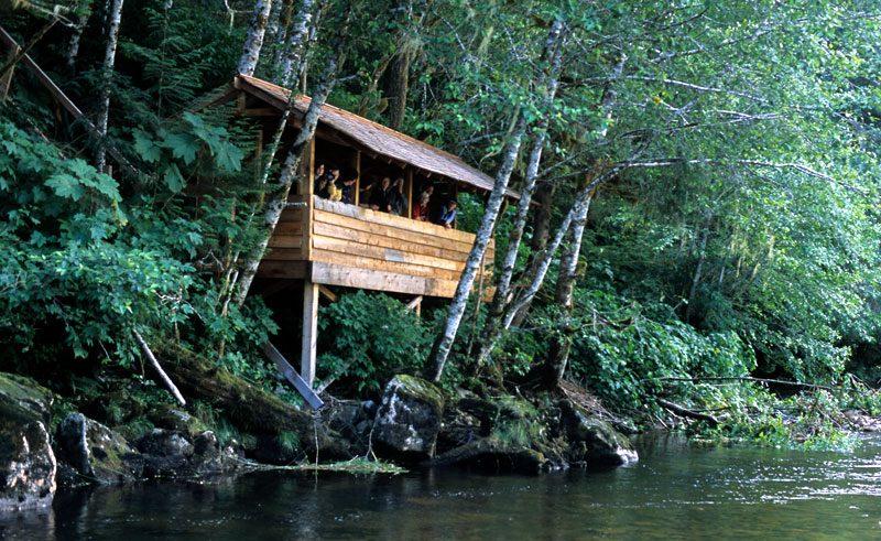 great bear lodge hide