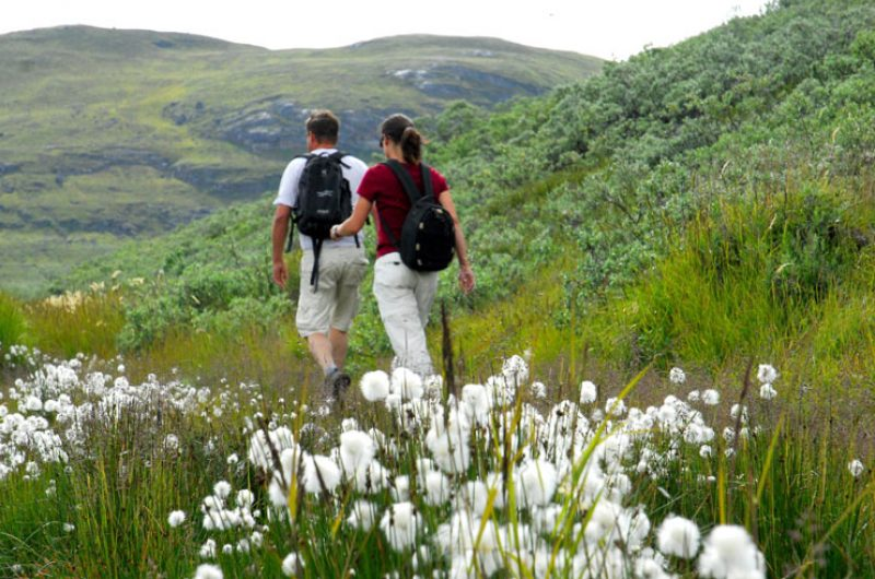 greenland flora hikers vg