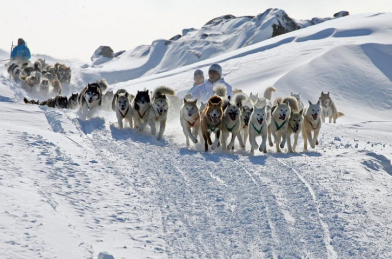 greenland west coast ilulissat husky sledding winter vg